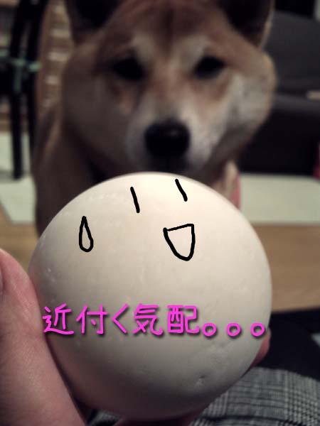 ボールとマメです。
