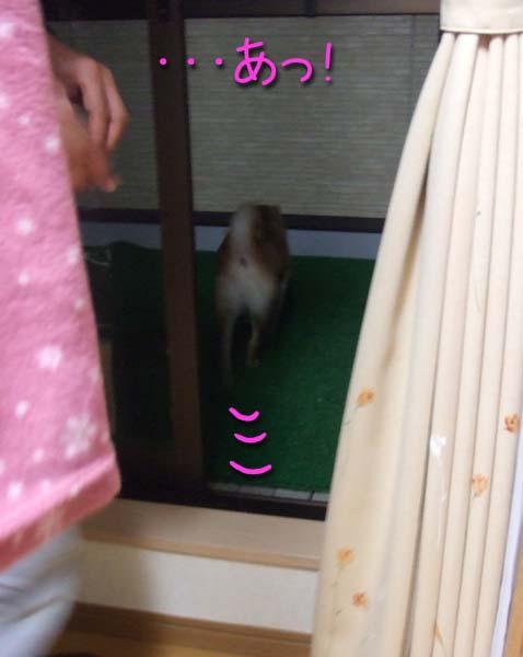 マメは外!?