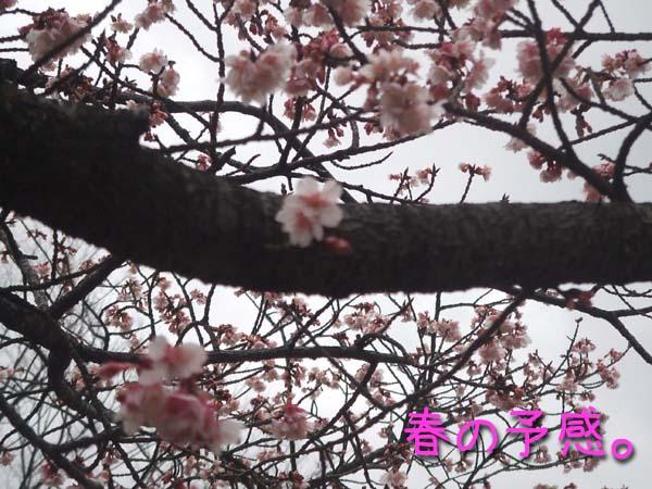梅?桜?桃?