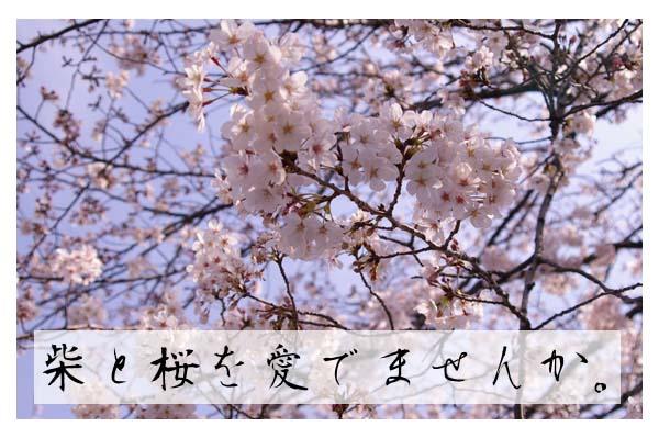 柴&桜を愛でようの会。
