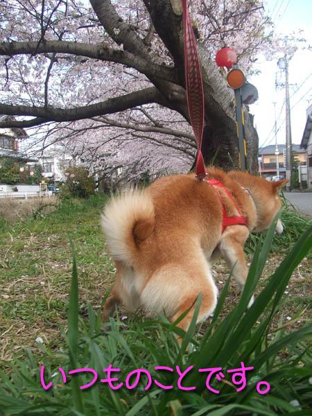 桜の下で・・・。