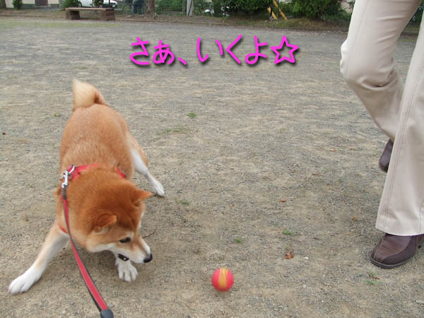 ボール大好き。