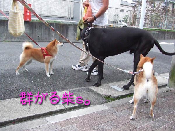 柴がちっちゃい☆