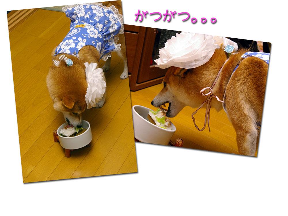 ガツガツ食う犬。