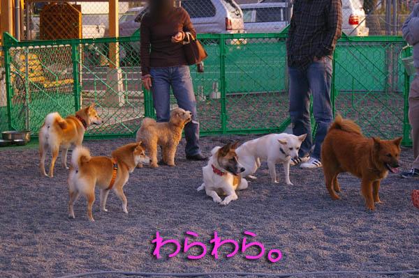 広いのに狭い場所に集まる犬と人。